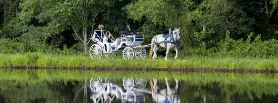 Horse Carriage at wedding venue